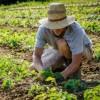 Logo del gruppo di Agricoltori Floricultori & Allevatori
